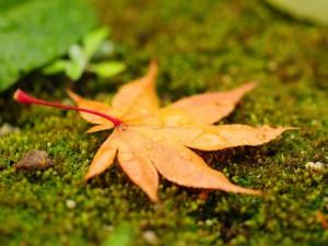 гадание в день осеннего равноденствия