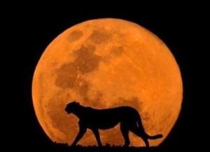 луна в соединении с луной в синастрии